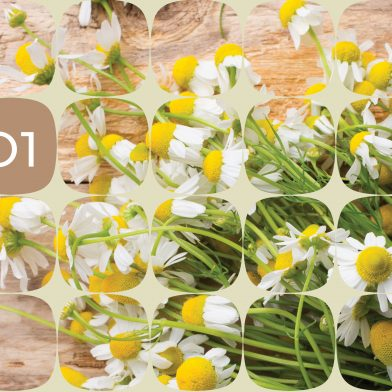 Odelo : Spring