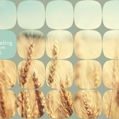 Odelo : Wheat