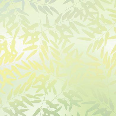 Eucalytpus