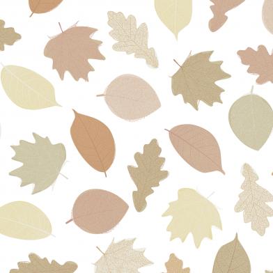 Fall : Autumn