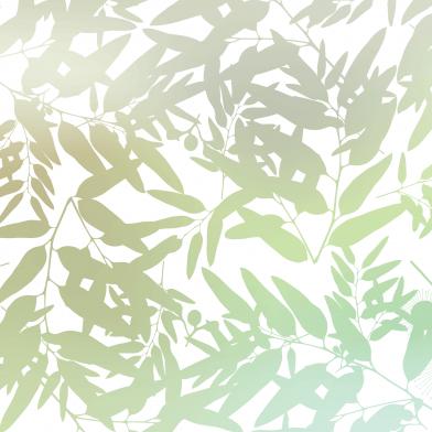 box gum : Leaf